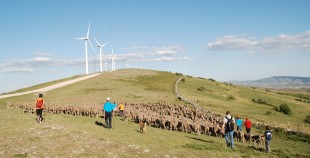 Trashumancia por Tierras Altas de Soria